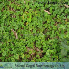 Manufacturer Supply Centella Asiatica P.E./Gotu Kola P.E/Gotu Kola Extract For Cosmetic Raw Material