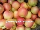 high quality fresh gala apple(delicious juice sweet)