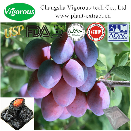 top quality organic plum extract/plum fruit extract