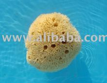 natural sea honey comp baby sponge