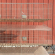 Customized supplier industrial rabbit bunny cages