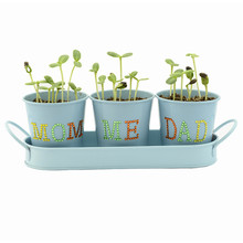DIY Novelty Planters Indoor Garden Windowsill Growing Kit with flower pot/crystal/seed for family games