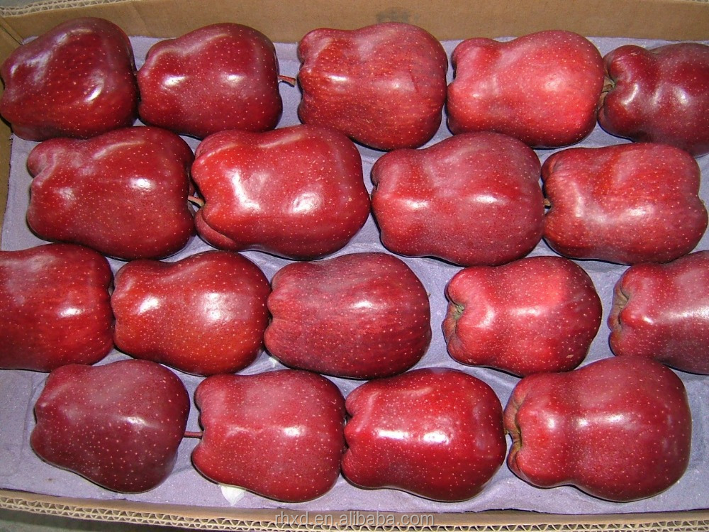 export fresh fuji apple low price/100% Quality Fresh red star Apples