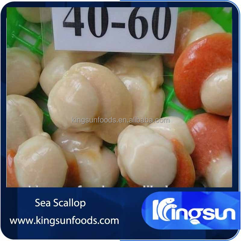 high quality IQF frozen half shell with roe sea scallop