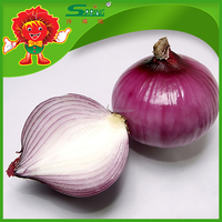 Fresh RED/YELLOW Onions Wholesale Onion China Origin Onion
