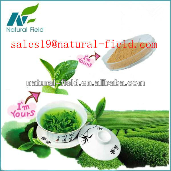 100% pure green tea extract / Polyphenols/organic green tea extract
