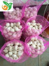 Sell Chinese Fresh Garlic from Jinxiang Farm