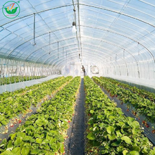 Agricultural products commercial PC sheet greenhouse for sale