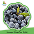 IQF Frozen blueberry