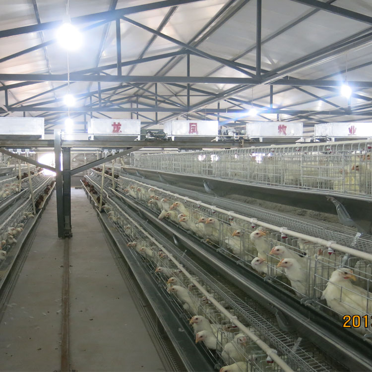 galvanized automatic chicken breeding feeding system equipment feeder and drinkers for chicken