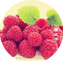 Top Quality Raspberry Extract 4:1~20:1 health food plant extract Raspberry extract/Rubus idaeus L/Raspberry Ketone
