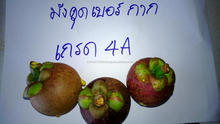 FRESH FRUIT MANGOSTEEN FOR WHOLESALE FROM AEC- THAILAND