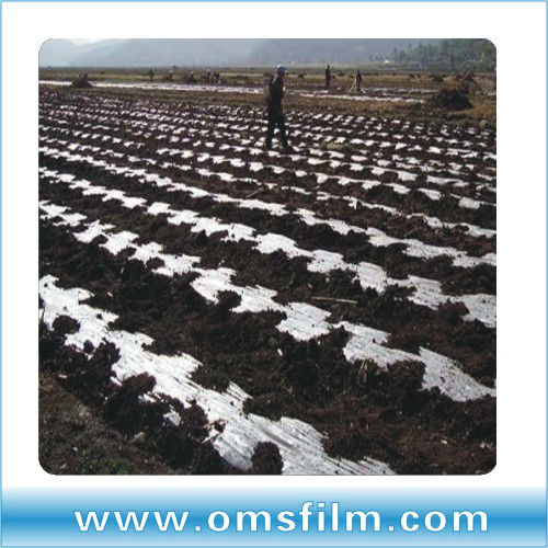 Taiwan technology silver black mulch specializing in the production of direct selling