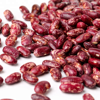 Wholesale 15% Moisture Dried Purple Speckled Kidney Beans