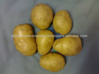 FRESH POTATO INDIA
