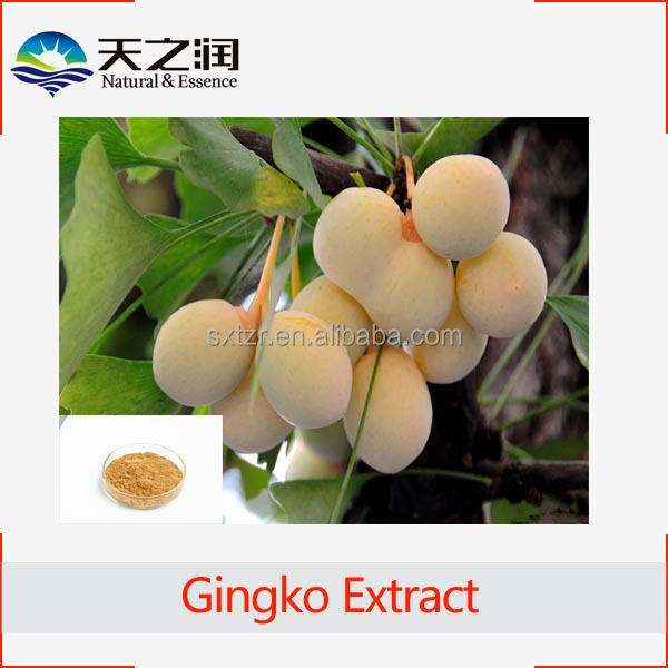Hot Product Semen Ginkgo Seed Powder Extract Powder