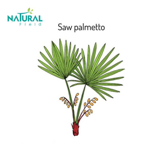 high quality saw palmetto extract diuretic and sexual tonic