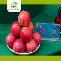 wholesale chinese qinguan apples bulk fresh fruit from china