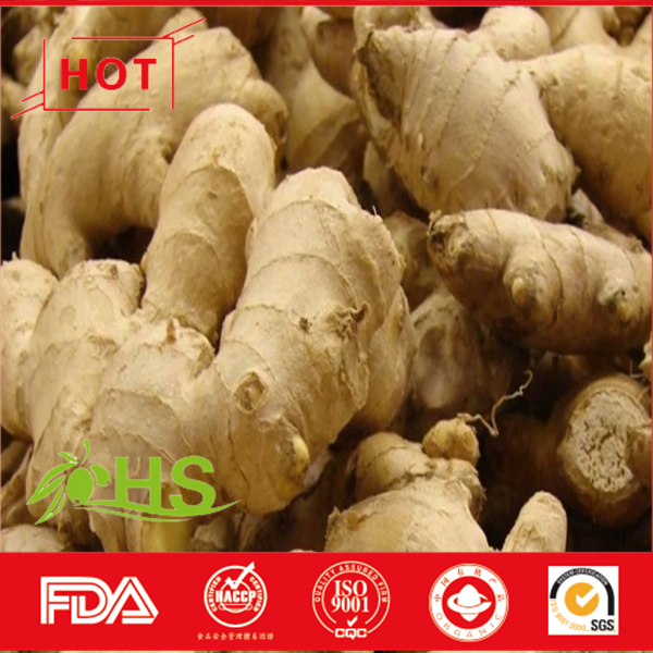 Yellow fresh ginger wholesale price