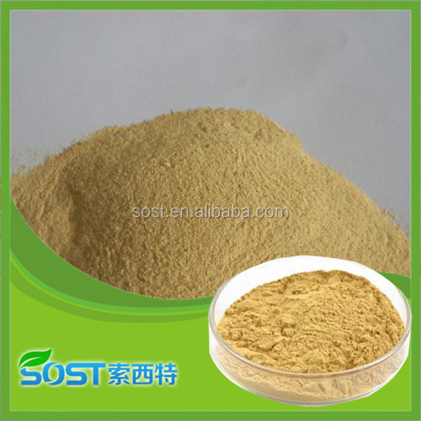 supply wholesale yeast extract powder