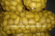 20kg/ Mesh Bag Fresh Holand Potato 2011 crop