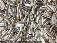 Striped confectionery sunflower seeds white sunflower seeds