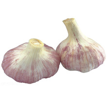wholesale garlic exporters in china