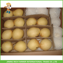 Ya Pear 40/44 Best Quality In 10kg Carton