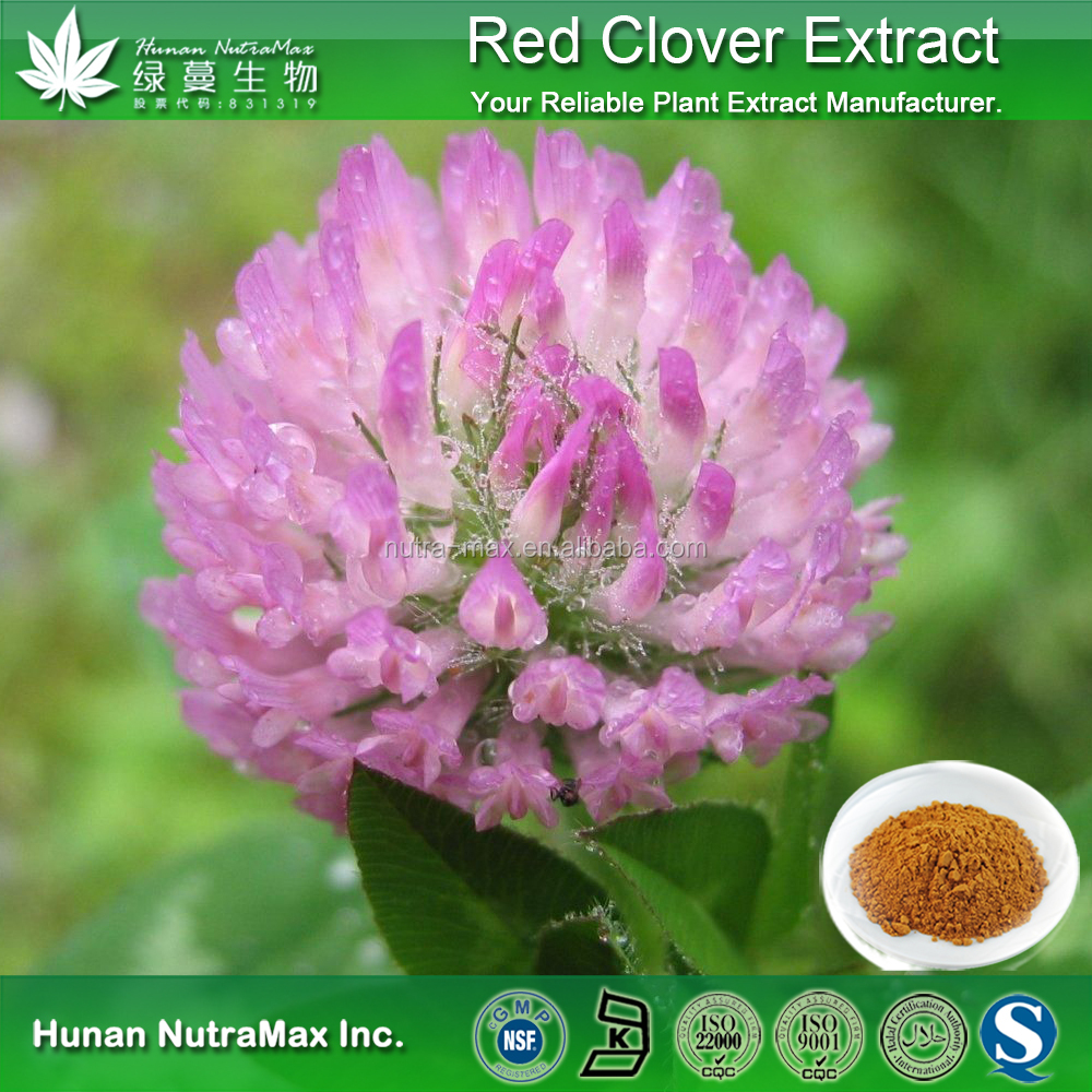 100% Pure Isoflavones Red Clover Powder | red clover extract