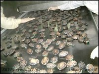 specialized latest abalone price