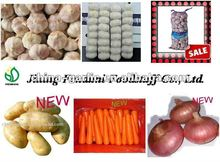 2012'Crop Chinese Fresh Fruite and Vegetable ( Fresh Garlic / Ginger / Potato )