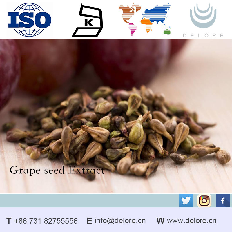 free sample grape seed extract OPC 95% Procyanidins grape seed P.E for Whitening skin care