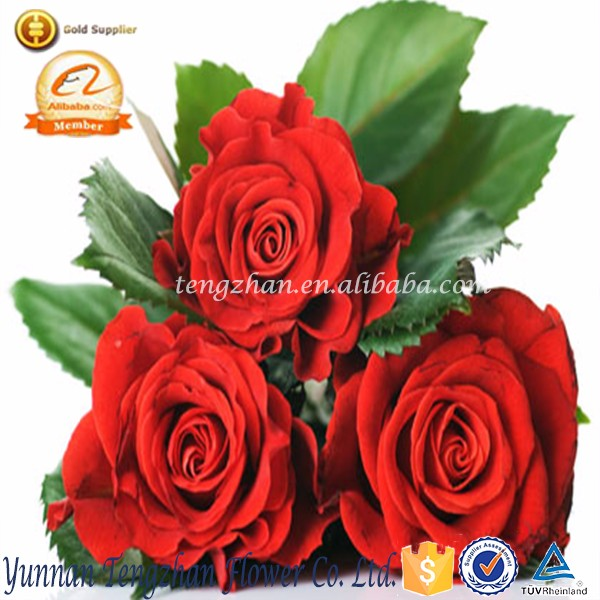 Factory direct classical export wholesale cemetery rose flower