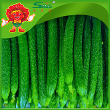 Fresh cucumber for export with competitive price