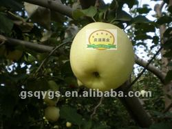 New season golden apple fruit price