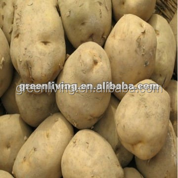 fresh china potato 75g-100g,150-200g ,mesh bag or carton