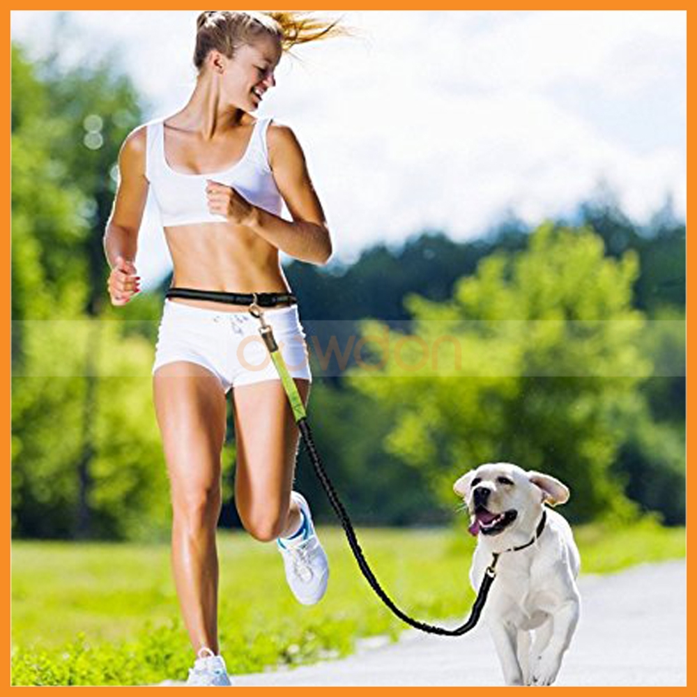 Adjustable Hands free Pet Dog Lead Walking Running Jogging Belt Leash