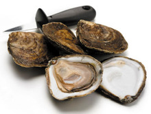 Oyster's) Pacific - supplied live