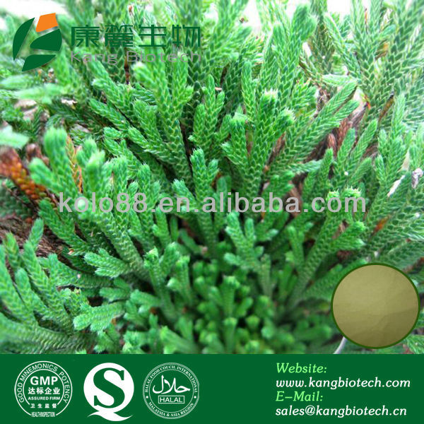 anti-inflammatory Cosmetic Ingredients Natural Amentoflavone Powder