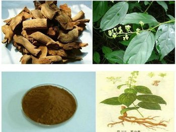 Thunder God Vine extract,Tripterygium wilfordii extract