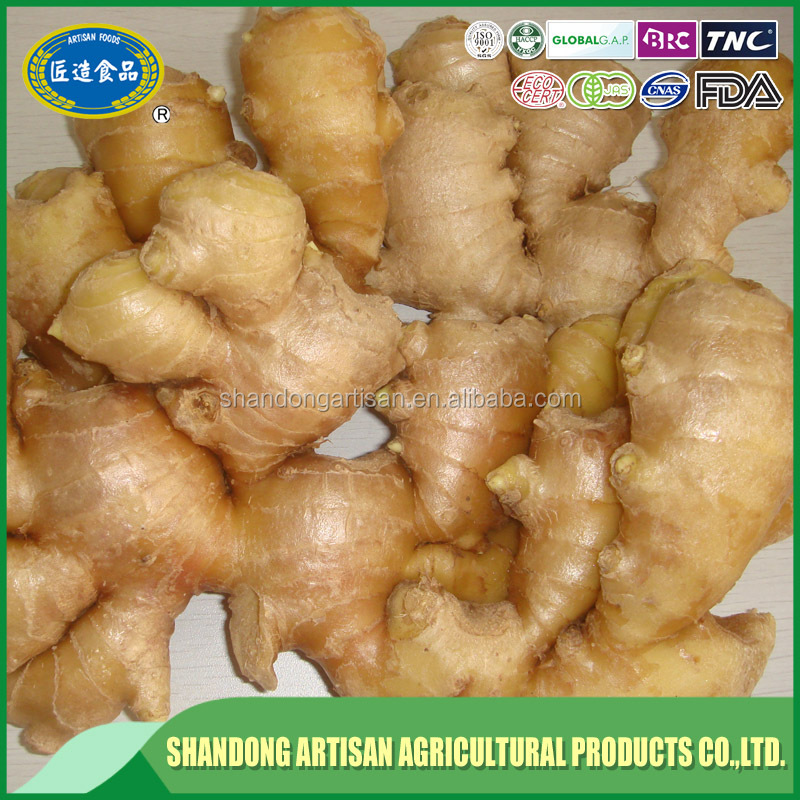 factory hot sales China new season ginger factory direct prices