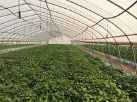 Poly Film Single Span Greenhouse