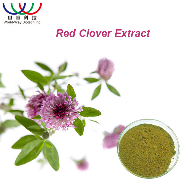 Free Sample Debenzolized Red Clover Extract 8% 2.5% 20% 40% Isoflavones
