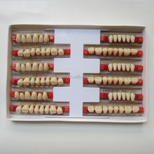 Two layer A2 A3 Colors Denture Teeth For Sale And Acrylic Teeth