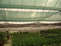 garden sun shade netting , hdpe shade net , windsurfing sail