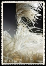 2012 wholesale withe ostrich feather trimming