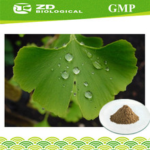 Supply Ginkgo Biloba Extract ,Nature Flavone 24%, Lactones 6% from Ginkgo Biloba Leaf powder Extract