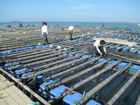 versatile HDPE aquaculture floating hdpe farming fish cage