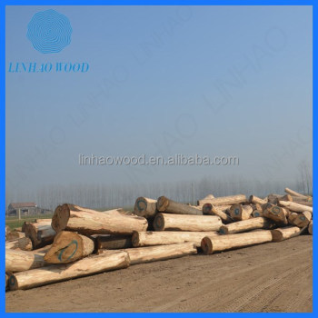 Factory Price Paulownia Wood Logs
