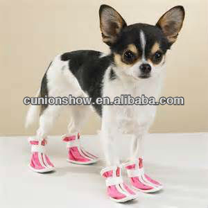 rubber boots for dog